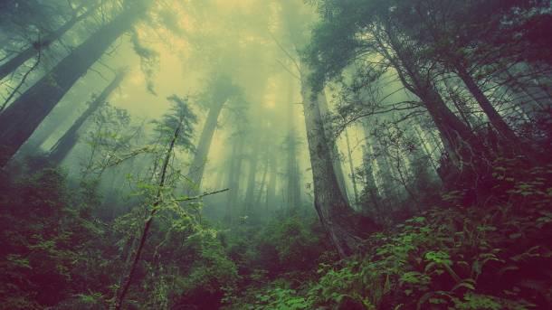 Niemcy: Wielki protest ekologów przeciwko wycince starego lasu w Hambach