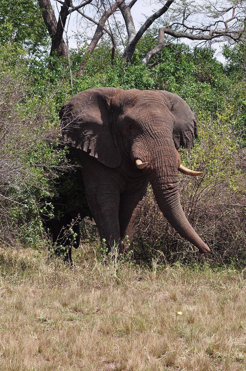 Słoń przeniesiony z zoo w Kalifornii do Atlanty
