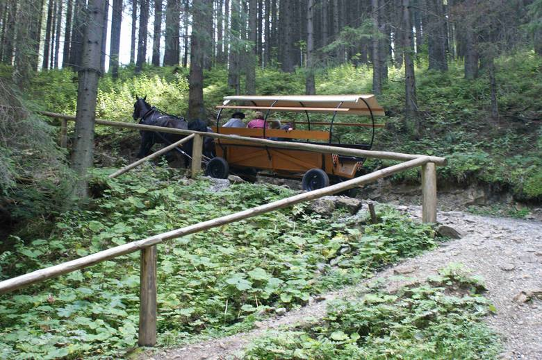Tatry. Wóz z 12 pasażerami…? Organizacje prozwierzęce chcą zakazu wjazdu koni na Wiktorówki