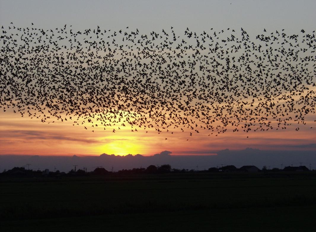 Pierwszy w Polsce przypadek ptasiej grypy u dzikich ptaków