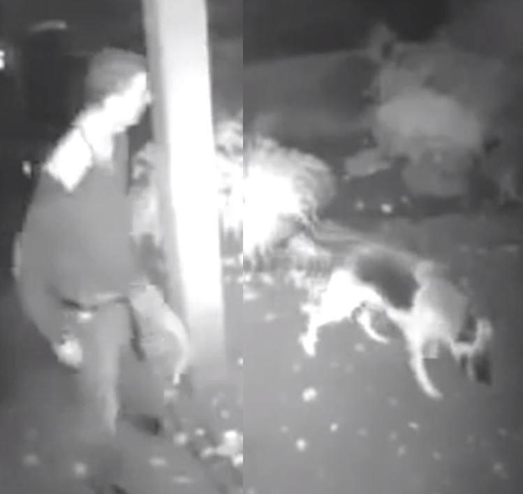 Katowice: Mężczyzna usiłował zgwałcić psa? Nagranie monitoringu z gwałtu na psie jest szokujące
