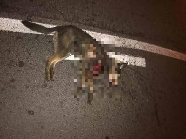 Białystok: Zwyrodnialec przywiązał psa do samochodu i ciągnął przez miasto