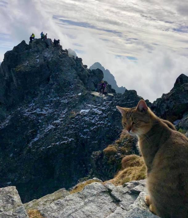 Turyści są w szoku! Na wierzchołek Rysów wdrapał się… kot!