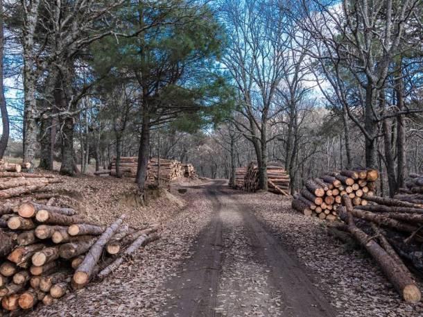 Warszawa. Ursus: Deweloper chciał wyciąć prawie 700 drzew. Teraz wycofał wniosek