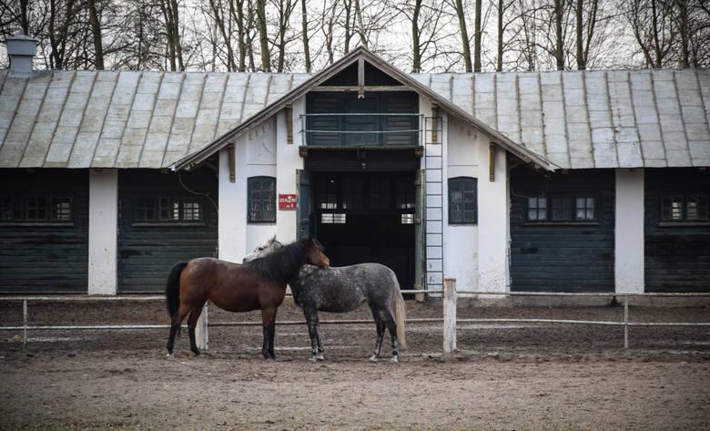 Nalot posłanek PO na stadninę koni w Janowie Podlaskim. Chcą wglądu w dokumenty