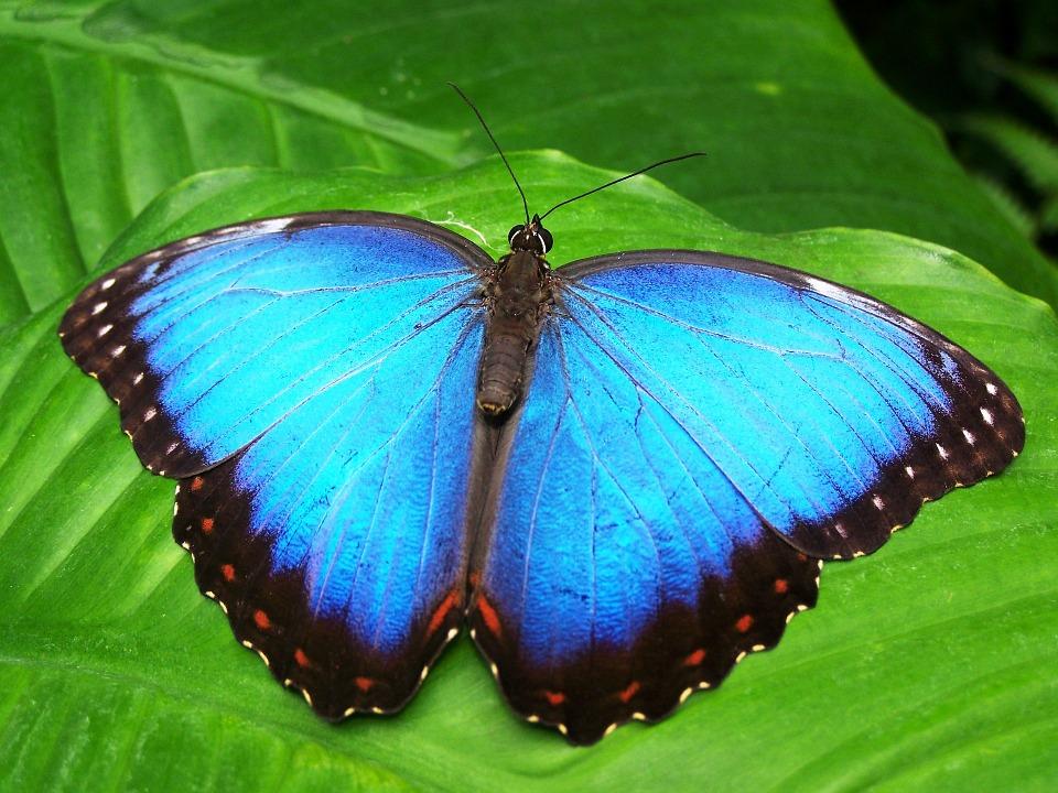 Populacja motyli na Florydzie zmalała o 80%