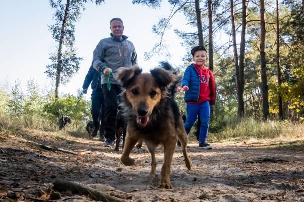Nawet 5 tys. zł grzywny grozi teraz za brak opieki lub szczucie psami. Ma to zapobiec atakom psów na dzieci