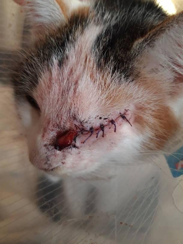 Lubuskie: Sadysta katował kotkę tak mocno, że zwierzak stracił oko