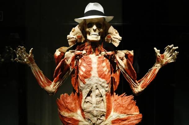 Warszawa: Ludzkie ciała i organy w PKiN. Kontrowersyjna wystawa Body Worlds
