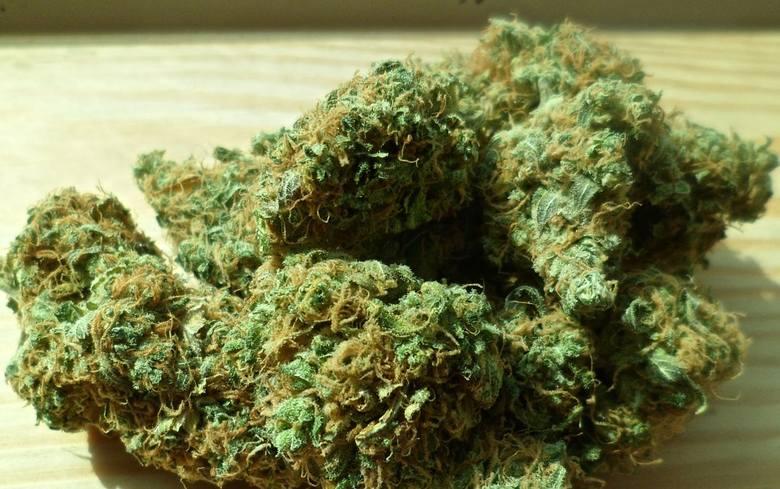 Ukryli marihuanę w transporcie papryczek jalapeno