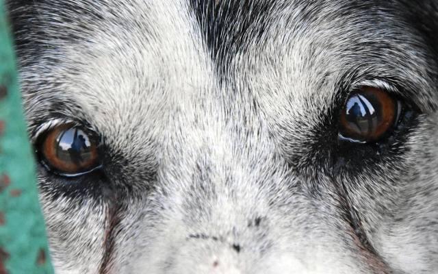 Małopolskie: Najwyższy wyrok w historii w Polsce za znęcanie się nad zwierzętami. Za zabicie psa sąd skazał sprawcę na 4 i pół roku więzienia