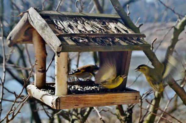 Dokarmiać zwierzęta czy nie? Tylko ptaki i tylko zimą