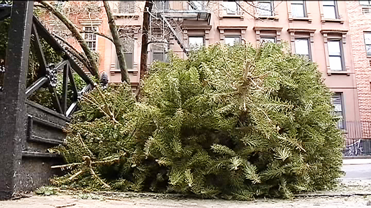 Ruszył recykling świątecznych drzewek