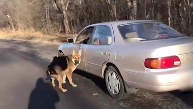 69-letni mężczyzna ciągnął psa za samochodem. Oskarżono go o znęcanie się nad czworonogiem