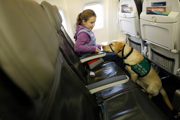 """Linie United zmieniły zasady podróżowania ze zwierzętami w ramach  """"emocjonalngo  wsparcia"""""""