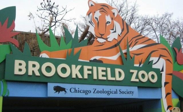 Darmowy wstęp dla dzieci do Brookfield Zoo