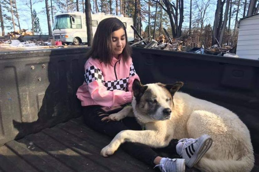 Pies wrócił do rodziny w Kalifornii 101 dni po niszczycielskim pożarze lasu