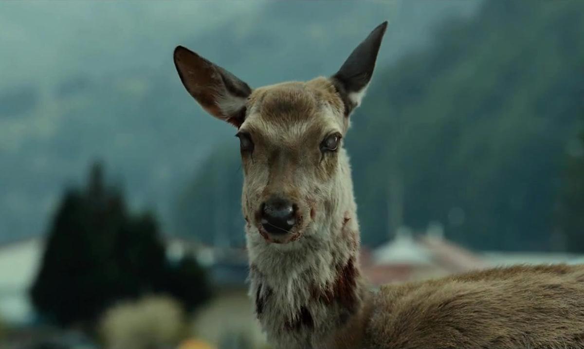 Ostrzeżenie przed jeleniami z chorobą zombie