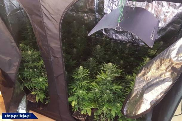 Policjanci z opolskiego CBŚP zlikwidowali fabrykę amfetaminy i plantację marihuany