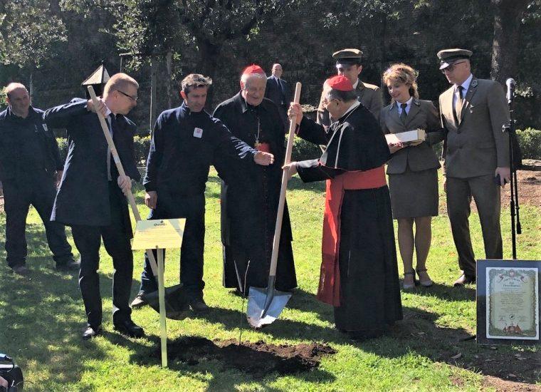W Ogrodach Watykańskich zasadzono polskie dęby