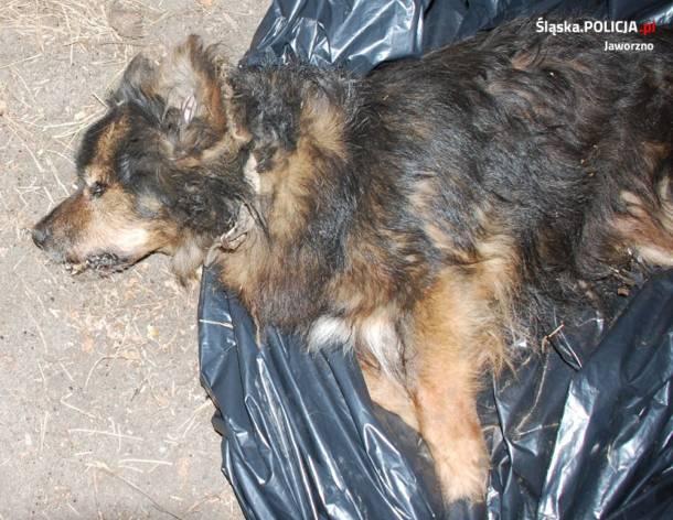 Jaworzno: Zakopał psa żywcem. Zgłosił się na komendę
