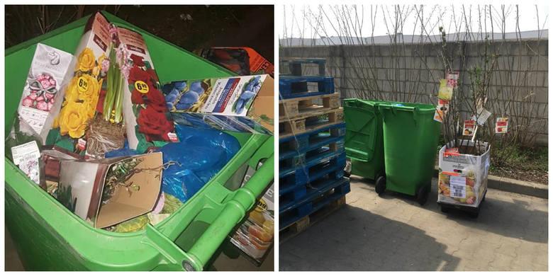 Poznań: Biedronka wyrzuca do śmietnika dobre produkty? Pracownicy sklepu nie pozwolili zabrać sadzonek z kontenera na śmieci