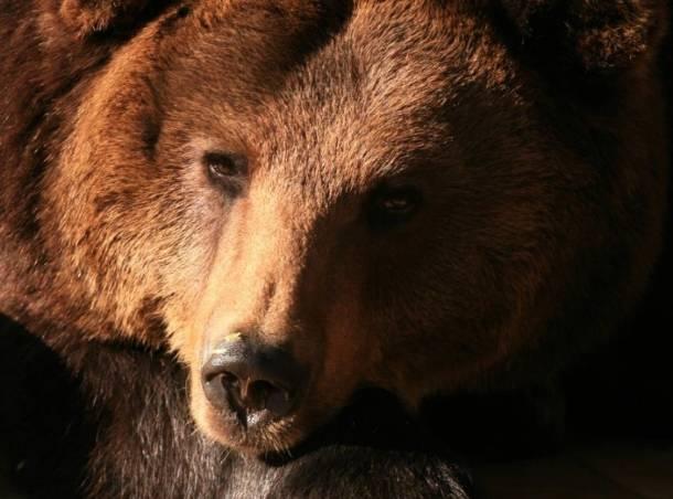 Gdańsk: Odeszła niedźwiedzica Cytra. Była jednym z najstarszych zwierząt w zoo