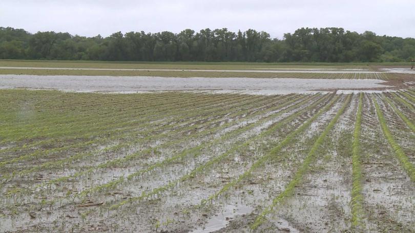 Mokry maj uniemożliwia farmerom pracę