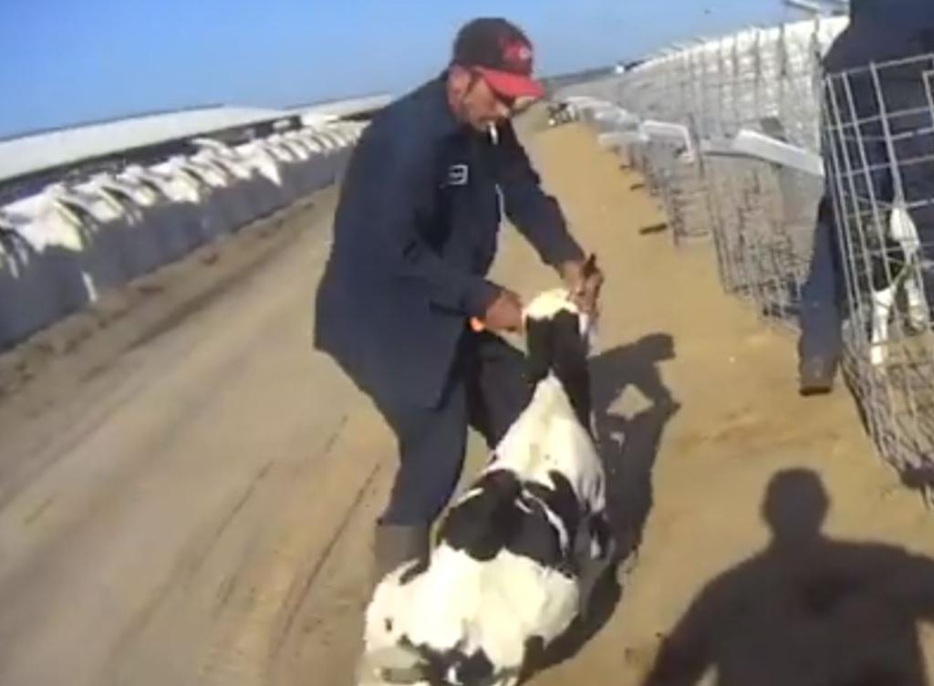 Policja poszukuje mężczyzn oskarżonych o znęcanie się nad zwierzętami na farmie w Indianie