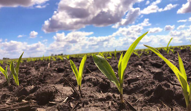 Farmerzy z Illinois mają opóźnienia w sadzeniu kukurydzy