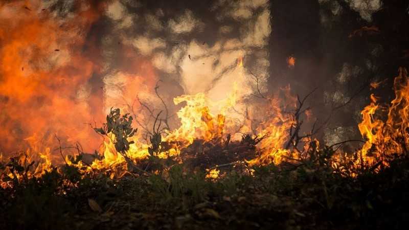 Strażacy walczą z pożarem na drugiej co do wielkości wyspie Grecji – Eubea. Ewakuowano mieszkańców