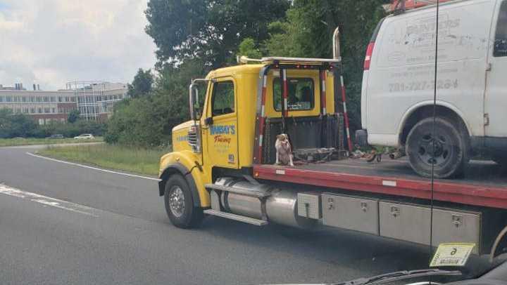 Pies na samochodzie pomocy drogowej. Policja prowadzi śledztwo