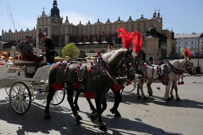 Kraków. Konie dorożkarskie w upale. Prokuratura umarza śledztwo