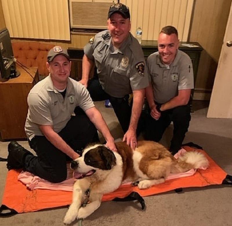 Ratownicy z EMS uratowali psa