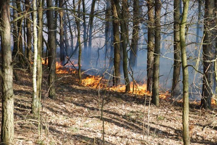 W Grecji wybuchło dziś ponad 50 pożarów lasów