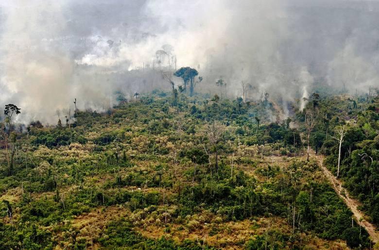Pożar Amazonii. Brazylijska armia gasi pożary lasów. Prezydent Bolsonaro zakazał wypalania pól