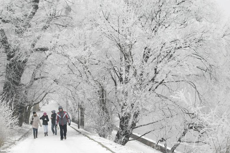 Wir polarny oznacza, że czeka nas zima trzydziestolecia? Temperatura spadnie do -20 stopni?