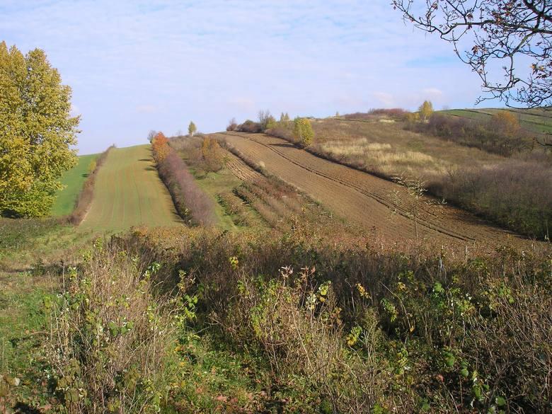 Gleby w Polsce. 90% powierzchni kraju to grunty rolne i leśne. Na mieszkańca przypada prawie hektar ziemi