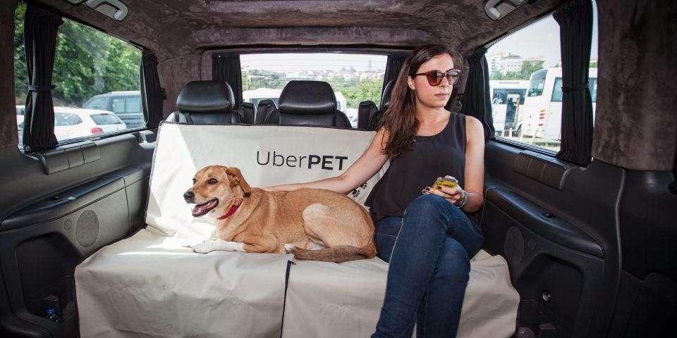 Uber zezwolił na przewóz zwierząt
